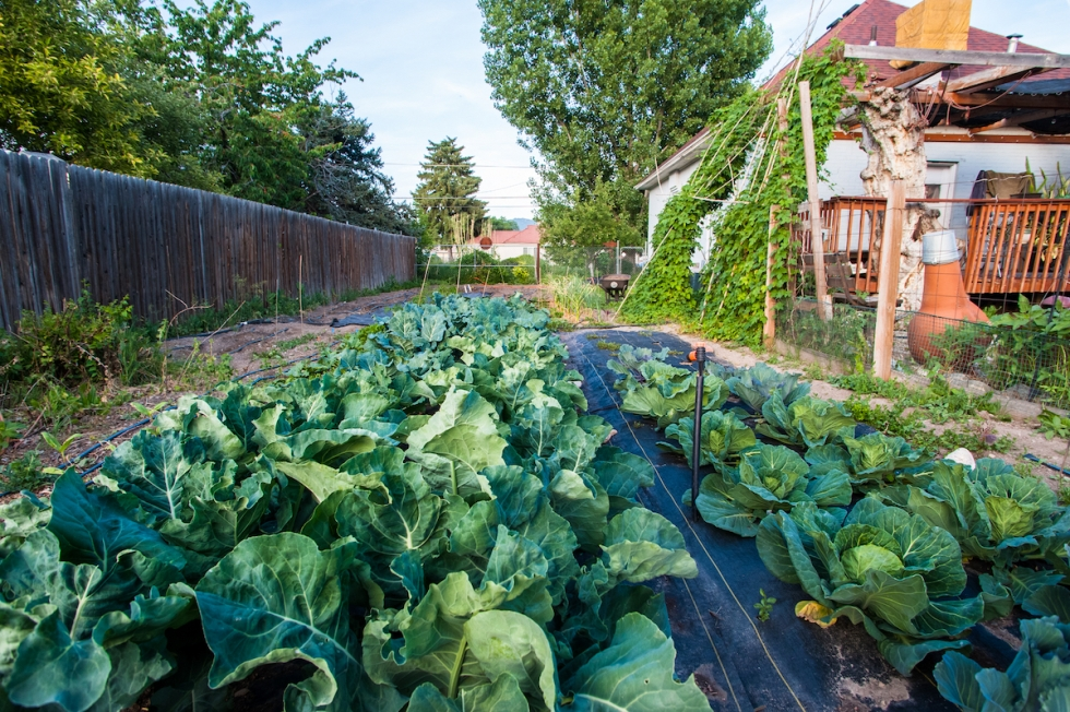 Urban agriculture thrives on west side