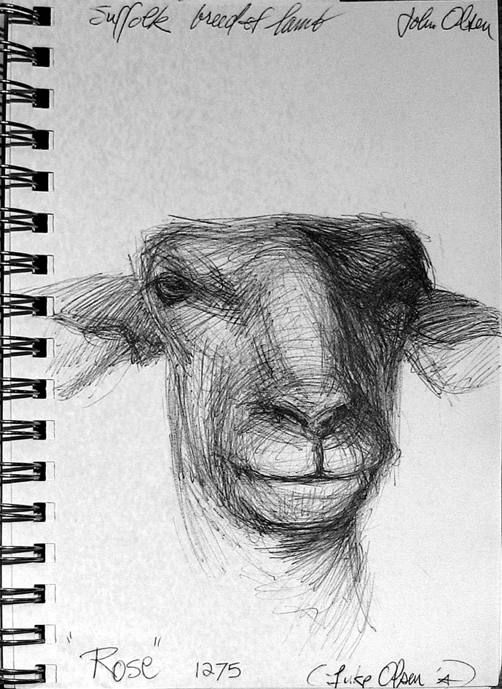 """From Ann Pineda's sketchbook, concerning a painting in her recent exhibit. """"The portrait of Rose, the sheep (who was wiggling around), was painted from sketches I made while she was being sheared at the Fair."""" Photo by Michael Evans"""