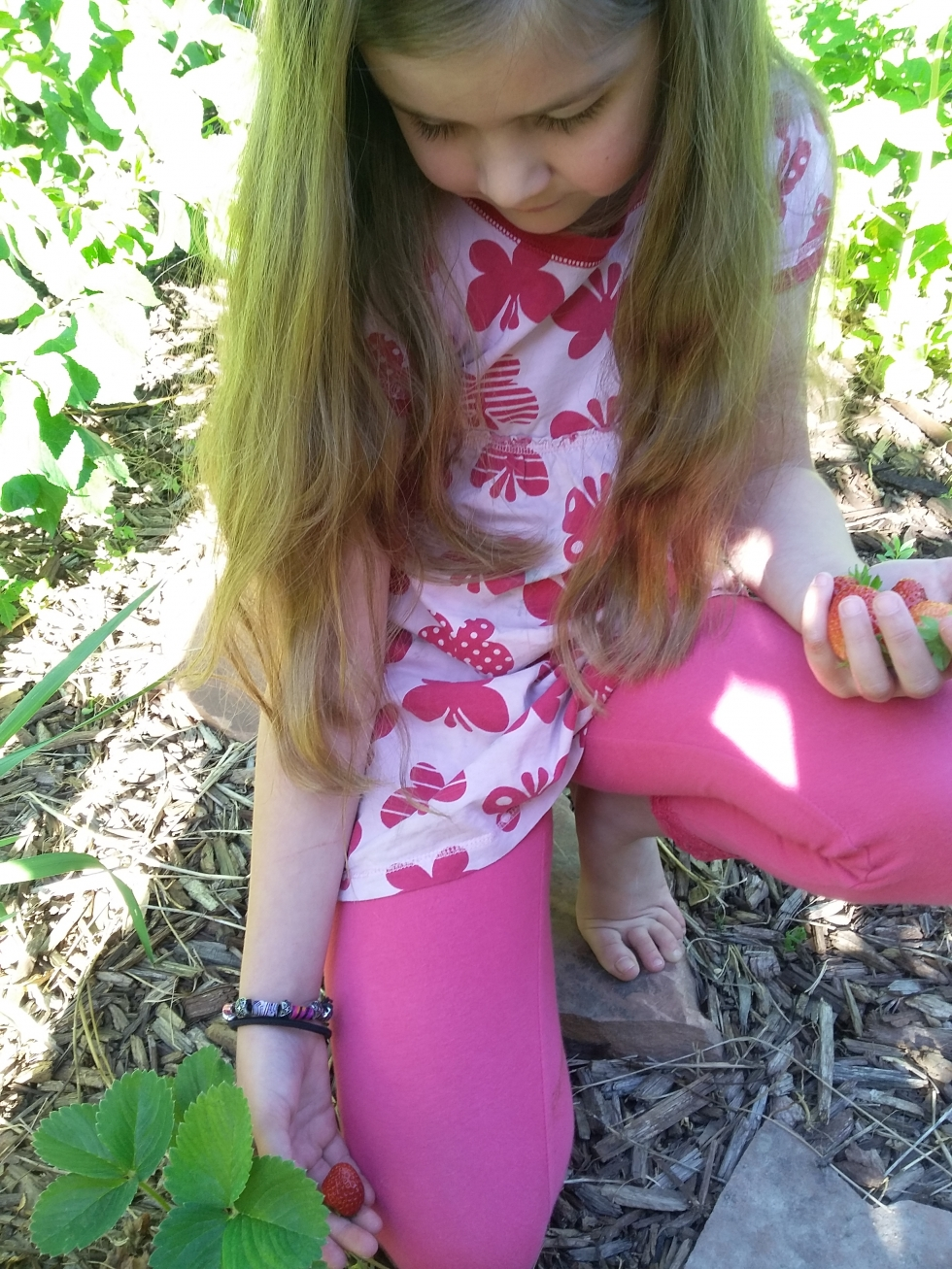 Willow Jordan enjoys the fruits of her labor as she picks strawberries in her garden.  Photo by Amy Jordan